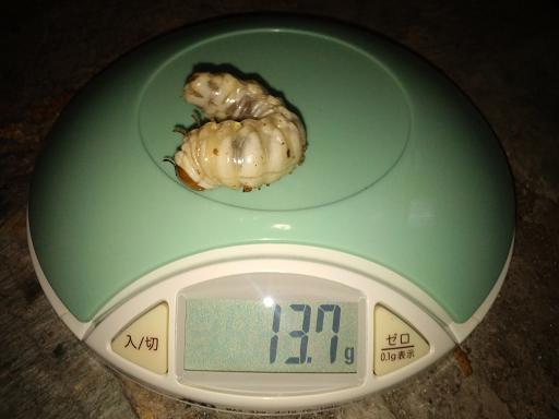 2011 11 14_2423.JPG