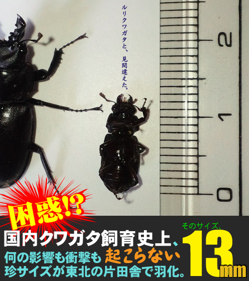 CA3I1108のコピー.png