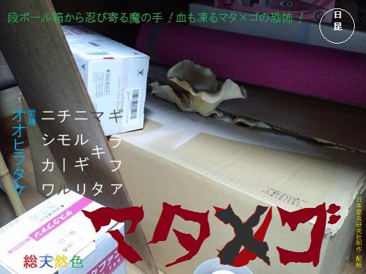 オオヒラタケ.jpg