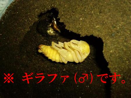 2010 10 15_1456の.jpg
