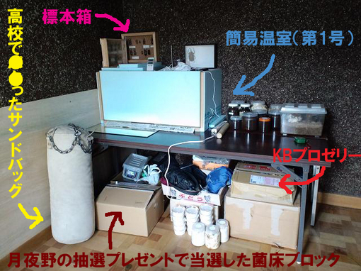 2010 11 10_1502.JPG