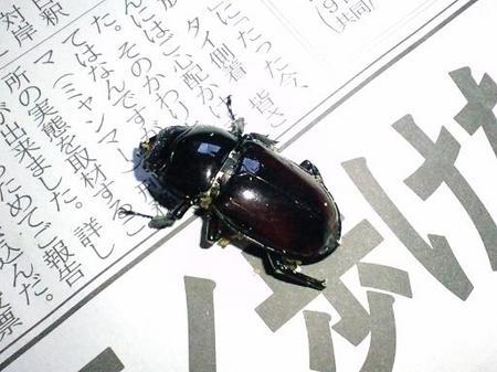 2010 11 11_1511.JPG
