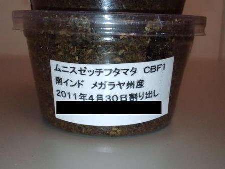 2011 06 02_1885.JPG