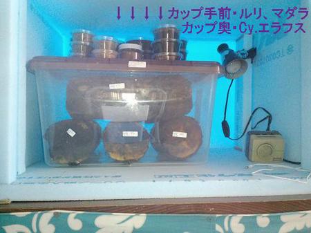 第2冷温室.JPG