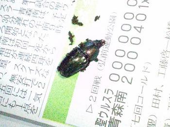 親♀ WF1 ブルーグリーン.JPG