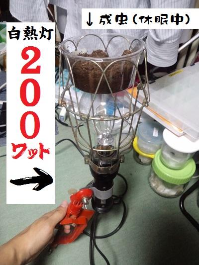 CA3I0158.JPG