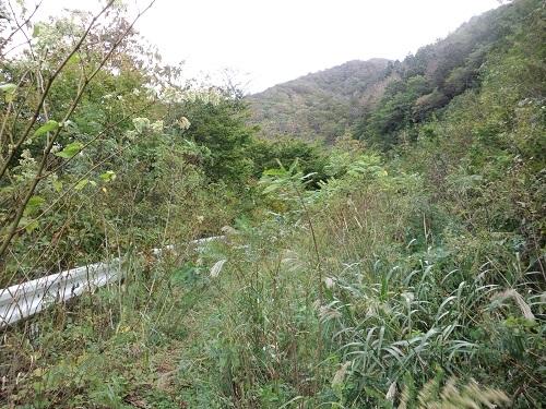 佐井の廃林道1.JPG