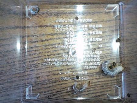2009 10 04_0725.JPG