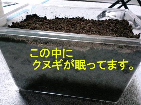 2010 04 27_1041_ペインティング.jpg