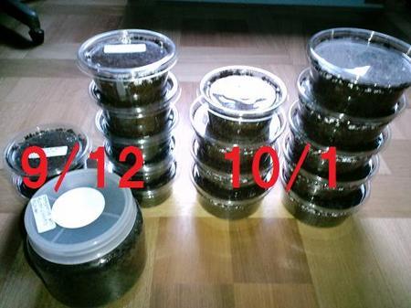 2010 10 01_1436.JPG