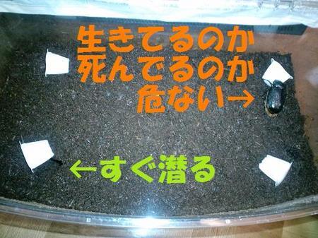 2011 05 29_1869.JPG