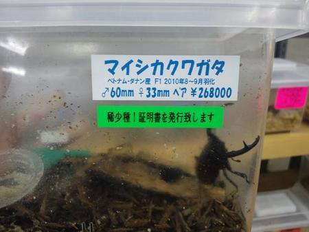 2011 07 19_1943.JPG