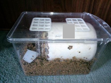 菌床産卵セット.JPG